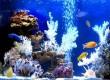 Готовые аквариумные решения